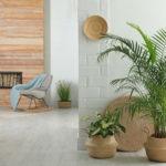 整体院や整骨院におすすめの観葉植物5選